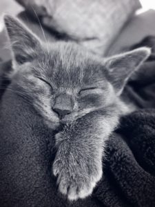Katzenschnurren gegen Depression